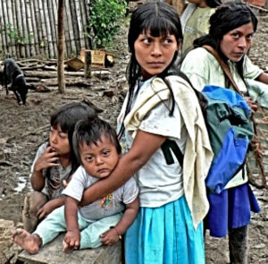 Nación Awá en peligro: en menos de 4 meses ya asesinaron a 7 referentes originarios