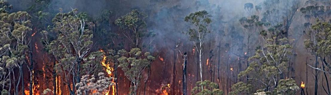 Acción mundial por la crisis climática