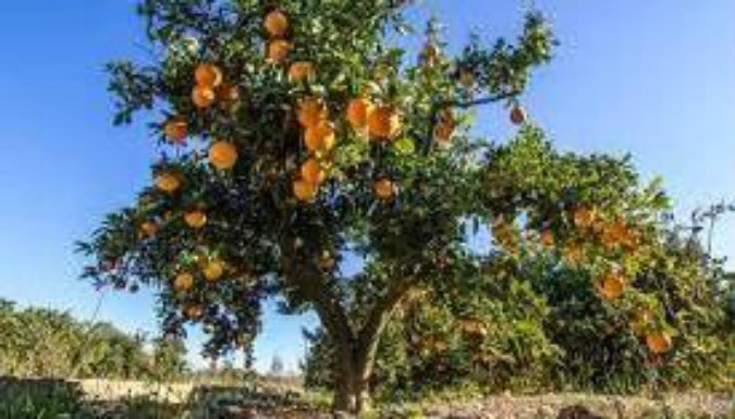 Murió una nena tras comer mandarinas contaminadas con agrotóxicos